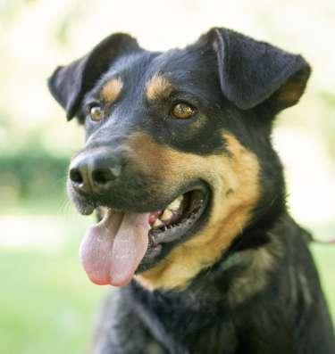 Молодая собака Лизонька в дар