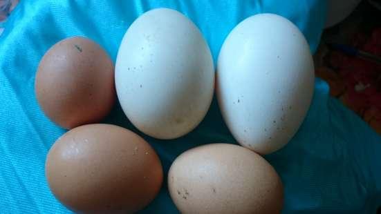 Яйца кур, гусей, молоко козье