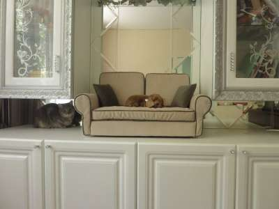 Диван-лежанка для собак и кошек в Щелково Фото 1