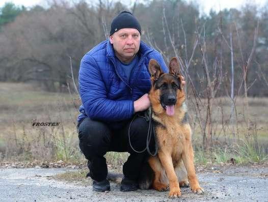 Щенок немецкой овчарки с отличной родословной в г. Минск Фото 2