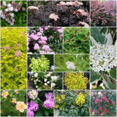 Продаю многолетние растения в Саратове Фото 1