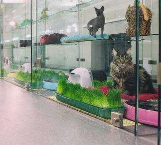 Гостиница для кошек, м. Смоленская