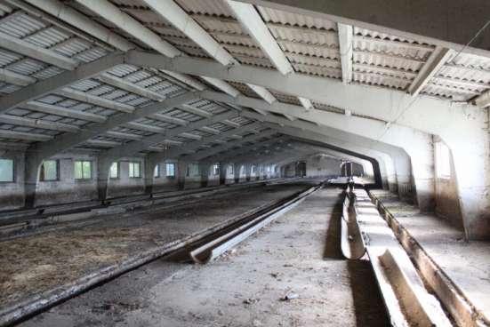 Продается свино-товарная ферма с земельным участком 19га в Краснодаре Фото 4