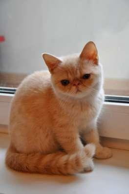 Продажа котят в Кемерове Фото 2