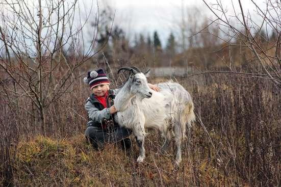 Животные на мероприятие в Санкт-Петербурге Фото 3