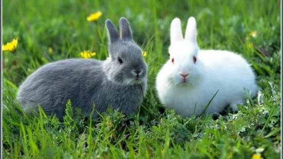 Молодые кролики со своего хозяйства