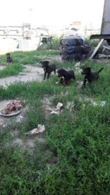 Отдам даром щенки для частного дома в Омске Фото 4