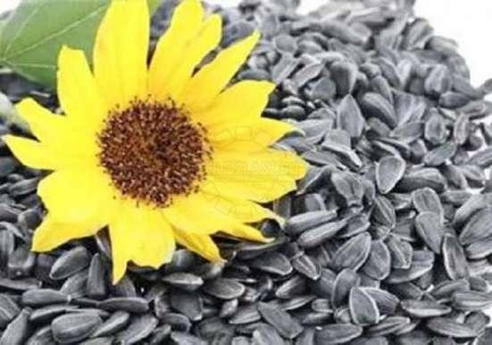 Куплю Паи Зерна Кукуруза Пшеница Ячмень Семечка Горох