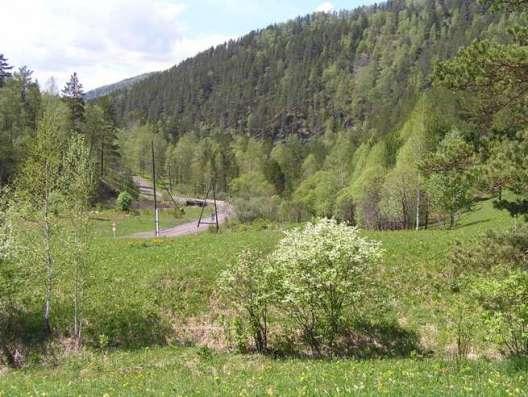 Купить земельный участок в Чемальском районе 6,5 Га