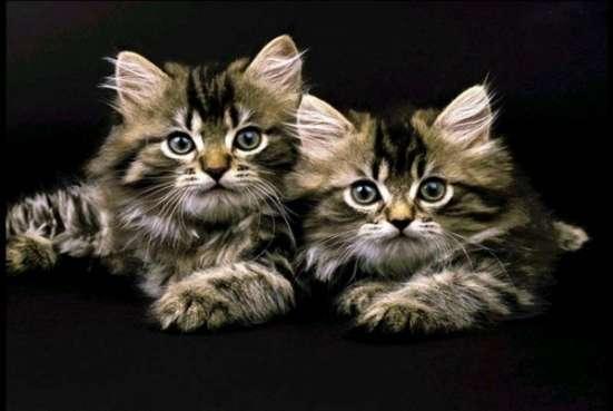 Квартирная передержка кошек