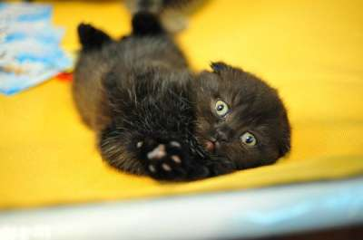 Международная выставка кошек всех пород