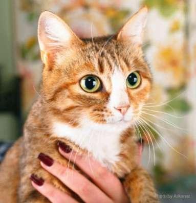 Отдам даром Лиззи - ласковая кошечка в добрые руки