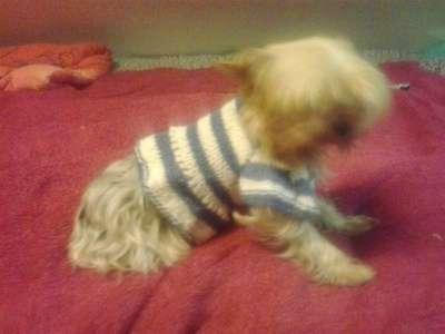 Вязанная одежда для собак в Новосибирске Фото 1