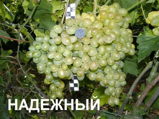 Продам черенки винограда