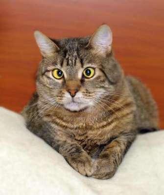Полосатый косоглазый звездный котик Ганс ищет дом! в Москве Фото 3