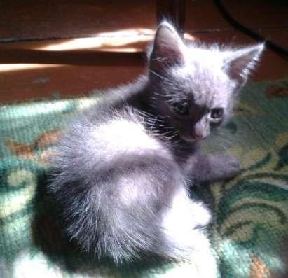 Отдам котят в хорошие руки в г. Усть-Каменогорск Фото 2