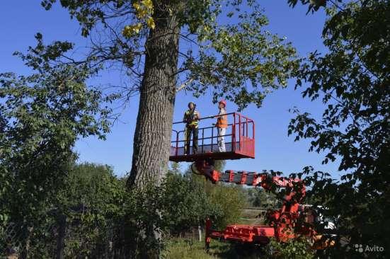 Удаление деревьев в Старом Осколе Фото 2
