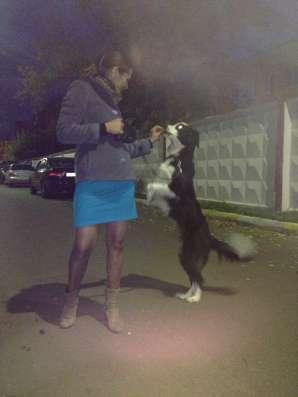 Выгул собак в Раменское Фото 3