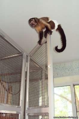 Клетки - вольеры для обезьян, лемуров