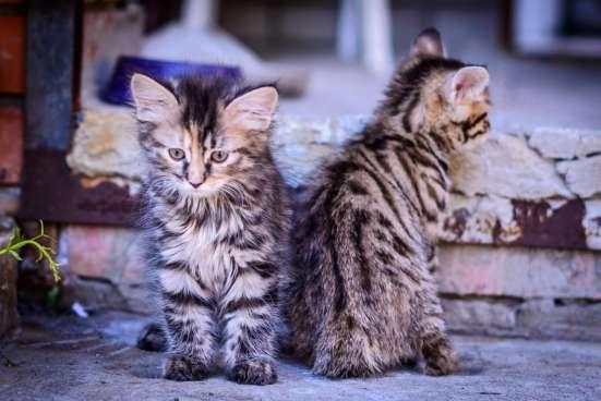 Котята с отличной родословной