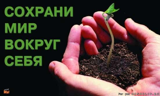 Озеленение, комплексное обслуживание без ХИМИИ